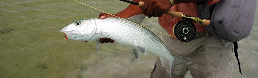 Xcalak Fly Fishing Bone Fish
