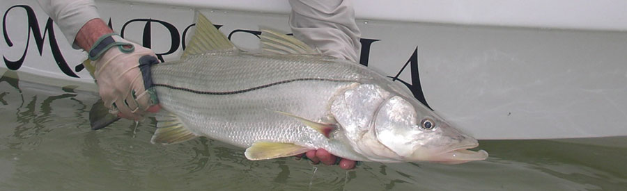 Mexico Snook Fly Fishing